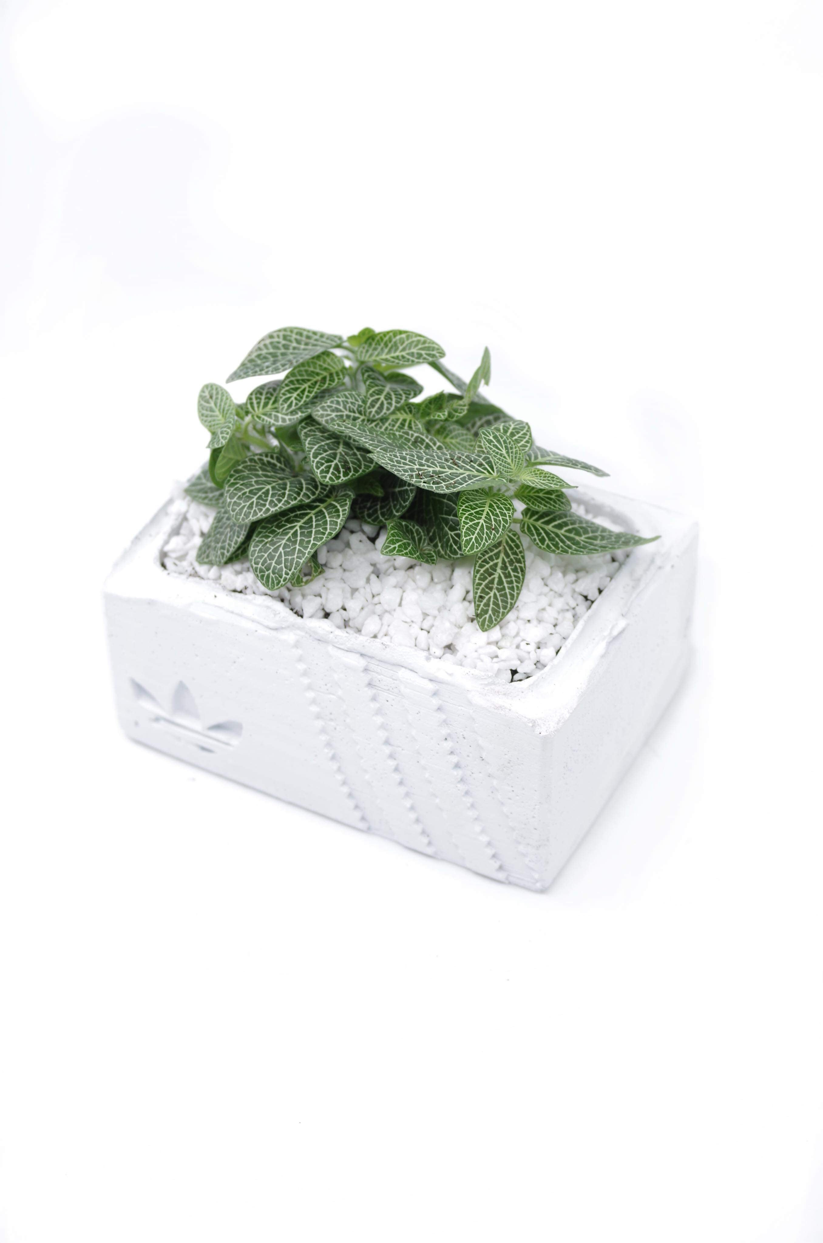 Adidas Concrete Sneaker Box Planter