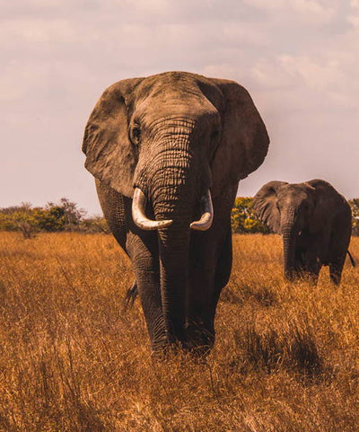 5 Top countries For A Family Safari Holiday – Richard Smith, co-owner Aardvark Safaris