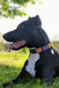 Dog Collar Vertical Stripe | Multi