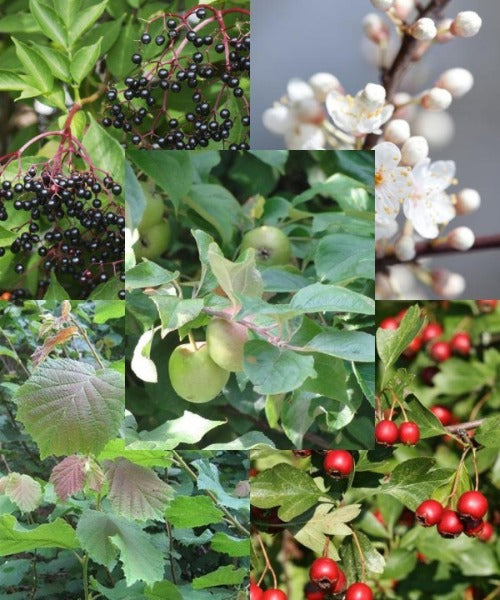 Wildlife Hedging Mix - Trees by Post