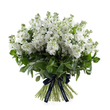 The Matthiola Bouquet - Hayford & Rhodes International