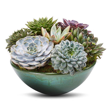 The Succulent Planter
