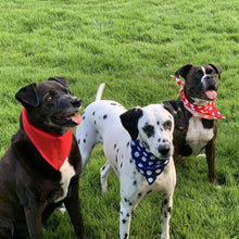 Load image into Gallery viewer, Handcrafted Red, White and Blue Pet Bandanas