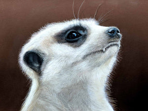 Mesmerised - Meerkat  SOLD