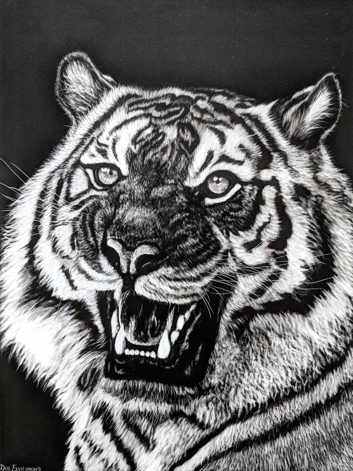 Tiger on Scratchboard