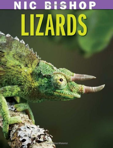Nic Bishop: Lizards