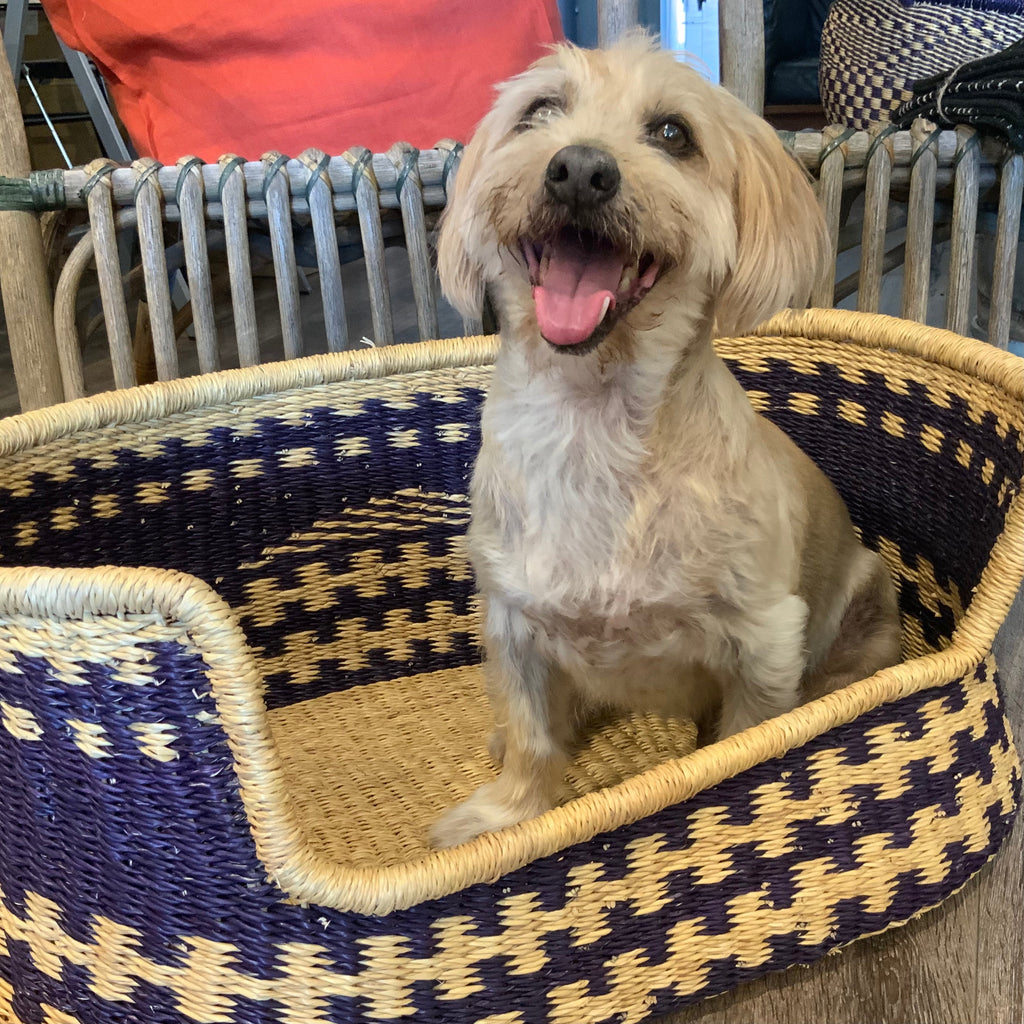 Eco friendly dog bed cane basket from Asiki, Sydney Australia