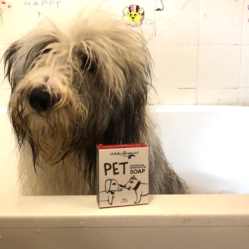 Eco Friendly Dog Shampoo from The Ekologi Store, Sydney, Australia