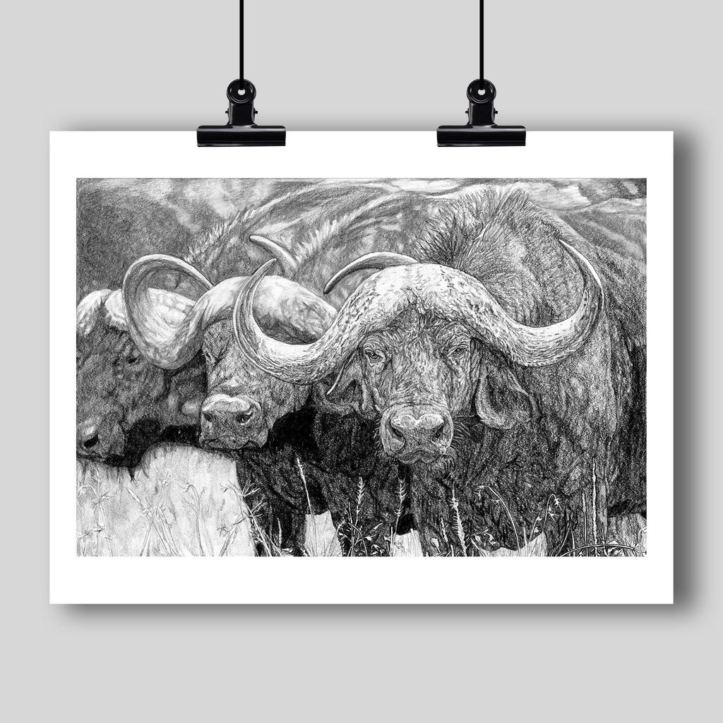 """African Cape Buffalo"" Fine Art Print - Dan Pearce Creative Shop"