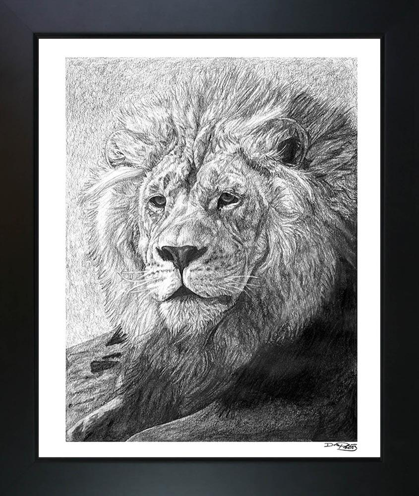 """African Nobility"" Fine Art Lion Print - Dan Pearce Creative Shop"