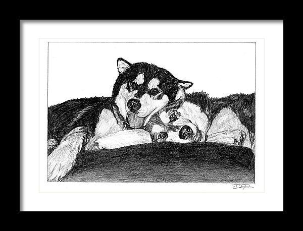 Alaskan Malamute Dogs Art Print - Dan Pearce Creative Shop