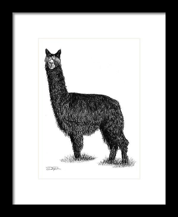 Alpaca Beauty Fine Art Print - Dan Pearce Creative Shop