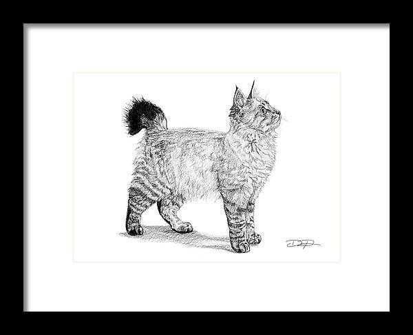 American Bobtail Cat Fine Art Print - Dan Pearce Creative Shop