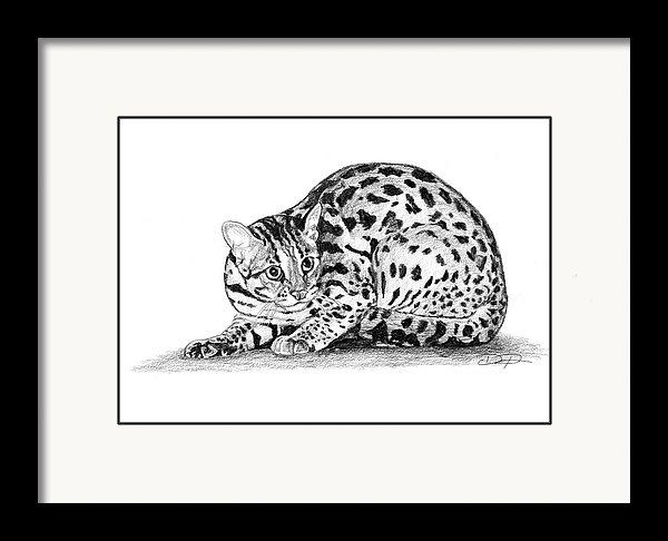 Asian Leopard Cat Art Print - Dan Pearce Creative Shop