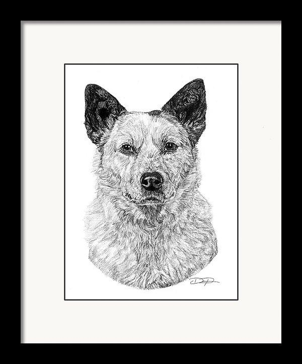 Australian Cattle Dog Art Print - Dan Pearce Creative Shop