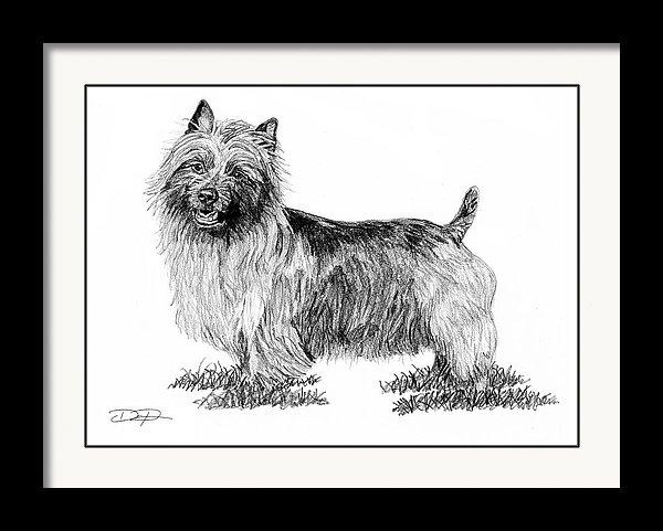 Australian Terrier Dog Fine Art Print - Dan Pearce Creative Shop