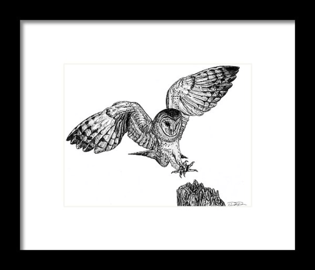 """Barn Owl"" Fine Art Print - Dan Pearce Creative Shop"
