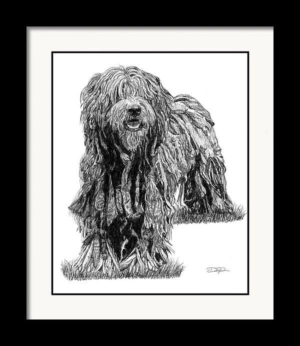 Bergamasco Sheep Dog Fine Art Print - Dan Pearce Creative Shop