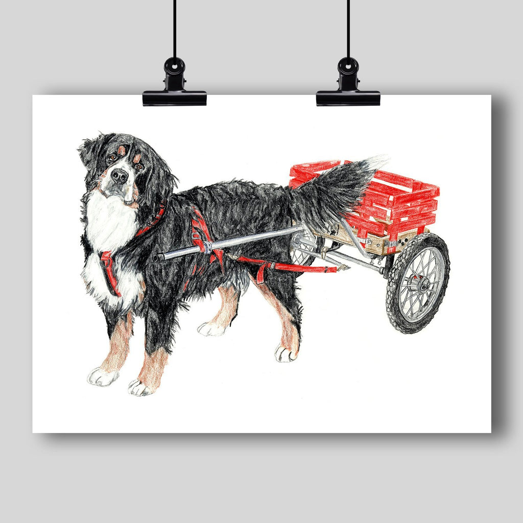 Bernese Mountain Dog Fine Art Print - Dan Pearce Creative Shop