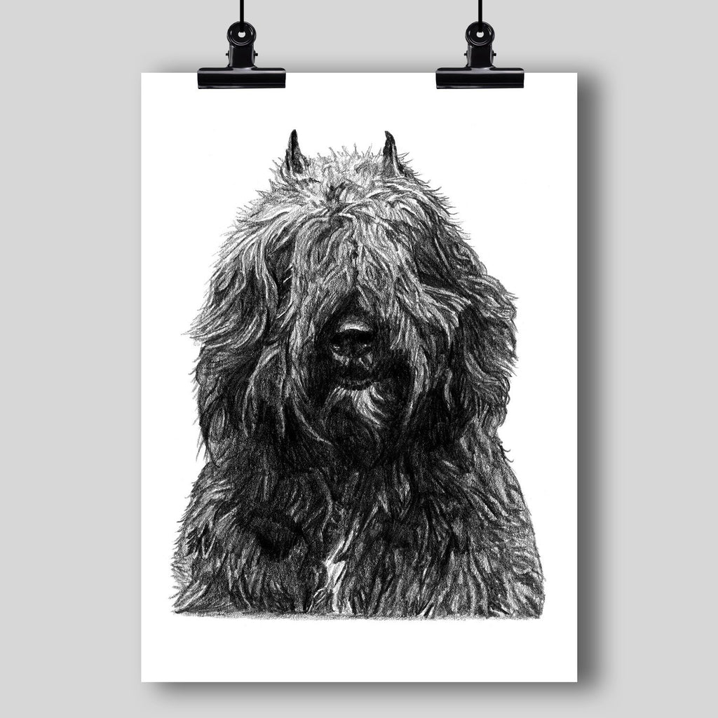 Bouvier des Flandres Dog Fine Art Print - Dan Pearce Creative Shop
