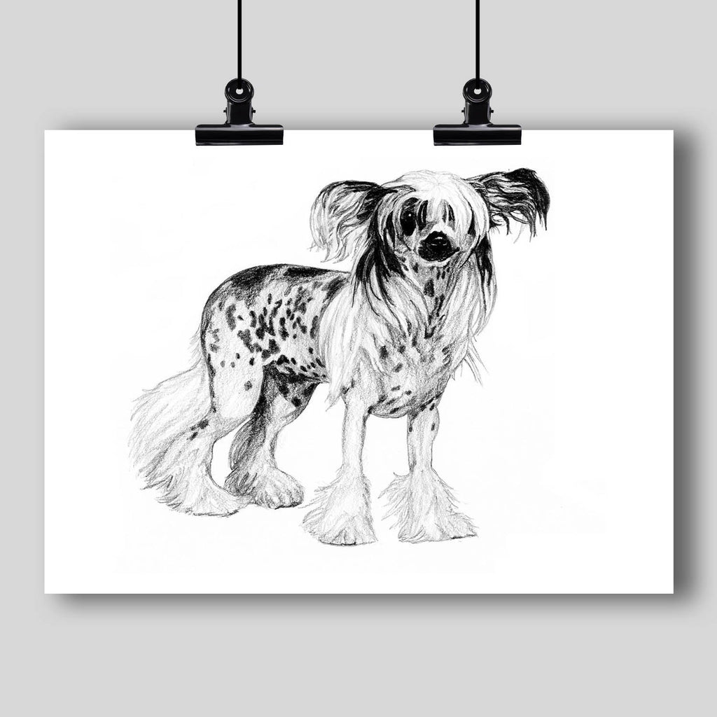 Chinese Crested Dog Fine Art Print - Dan Pearce Creative Shop
