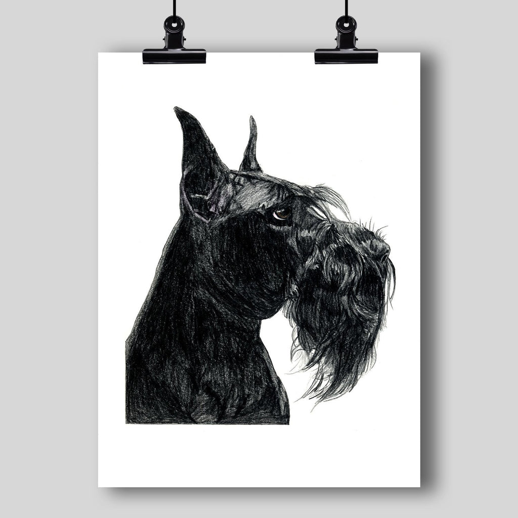 Giant Schnauzer Fine Art Print - Dan Pearce Creative Shop