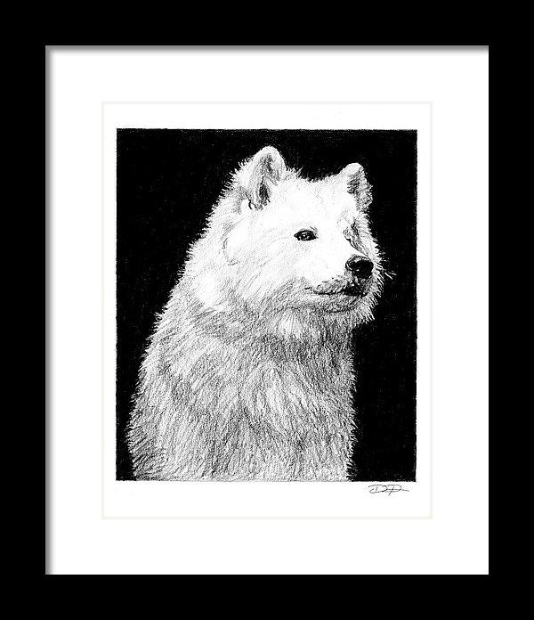 Samoyed Dog Fine Art Print - Dan Pearce Creative Shop