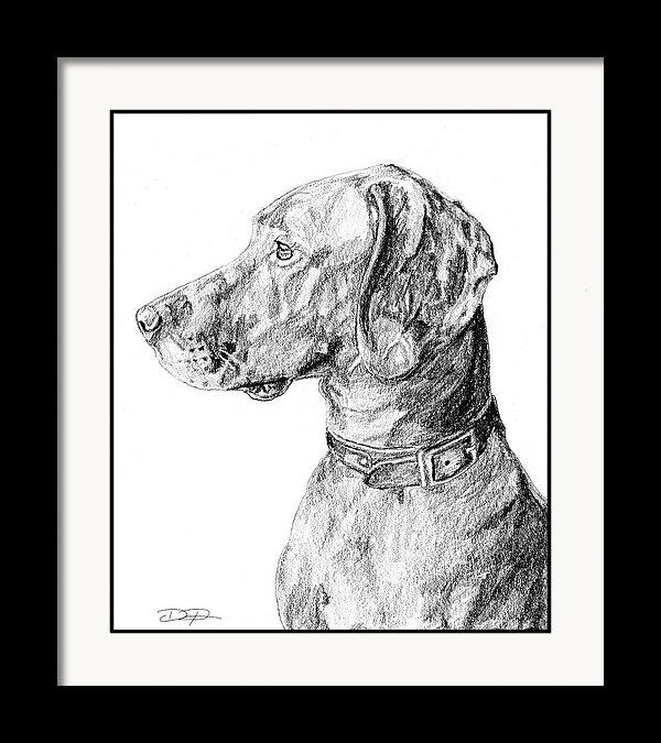 Vizsla Dog Fine Art Print - Dan Pearce Creative Shop