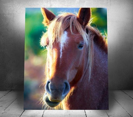 """Wild English Horse"" Single Canvas Wall Hanging 20"" x 24"" - Dan Pearce Creative Shop"