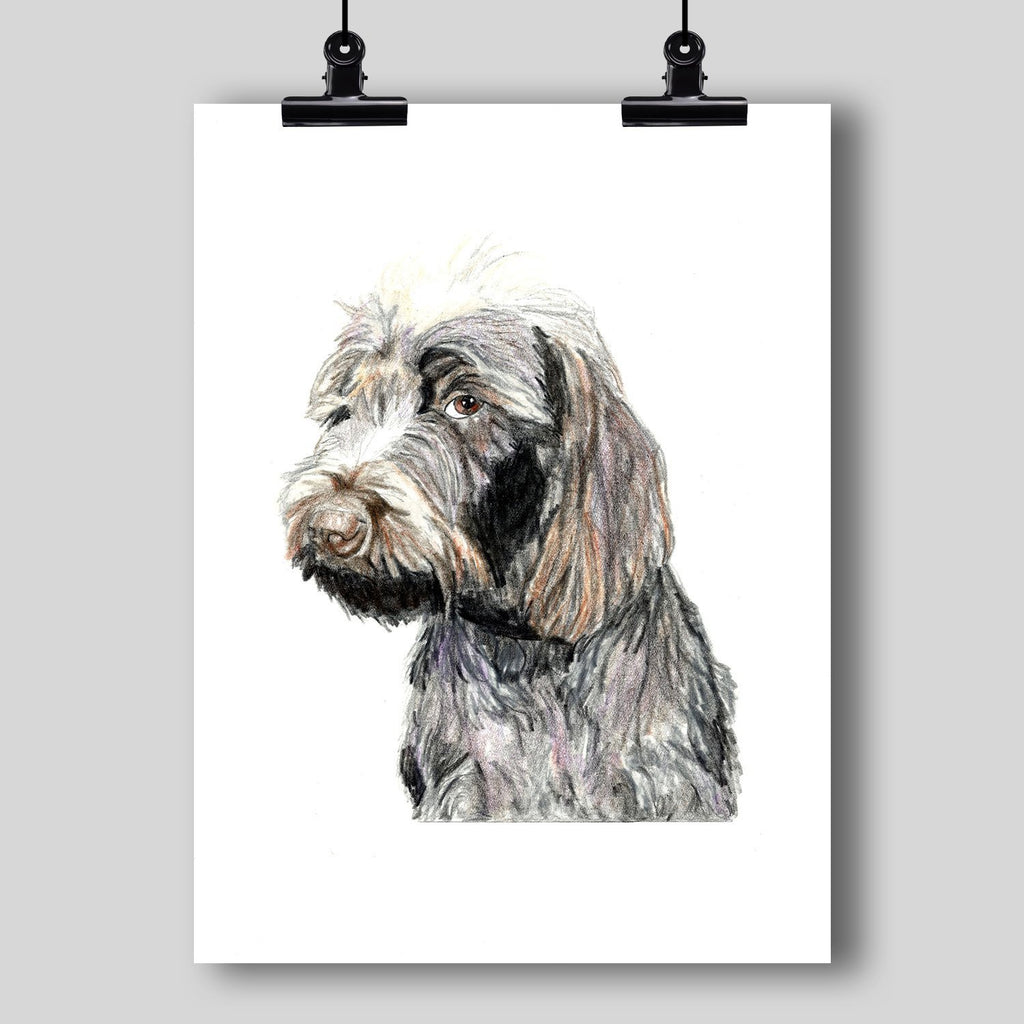Wirehaired Pointing Griffon Dog Fine Art Print - Dan Pearce Creative Shop