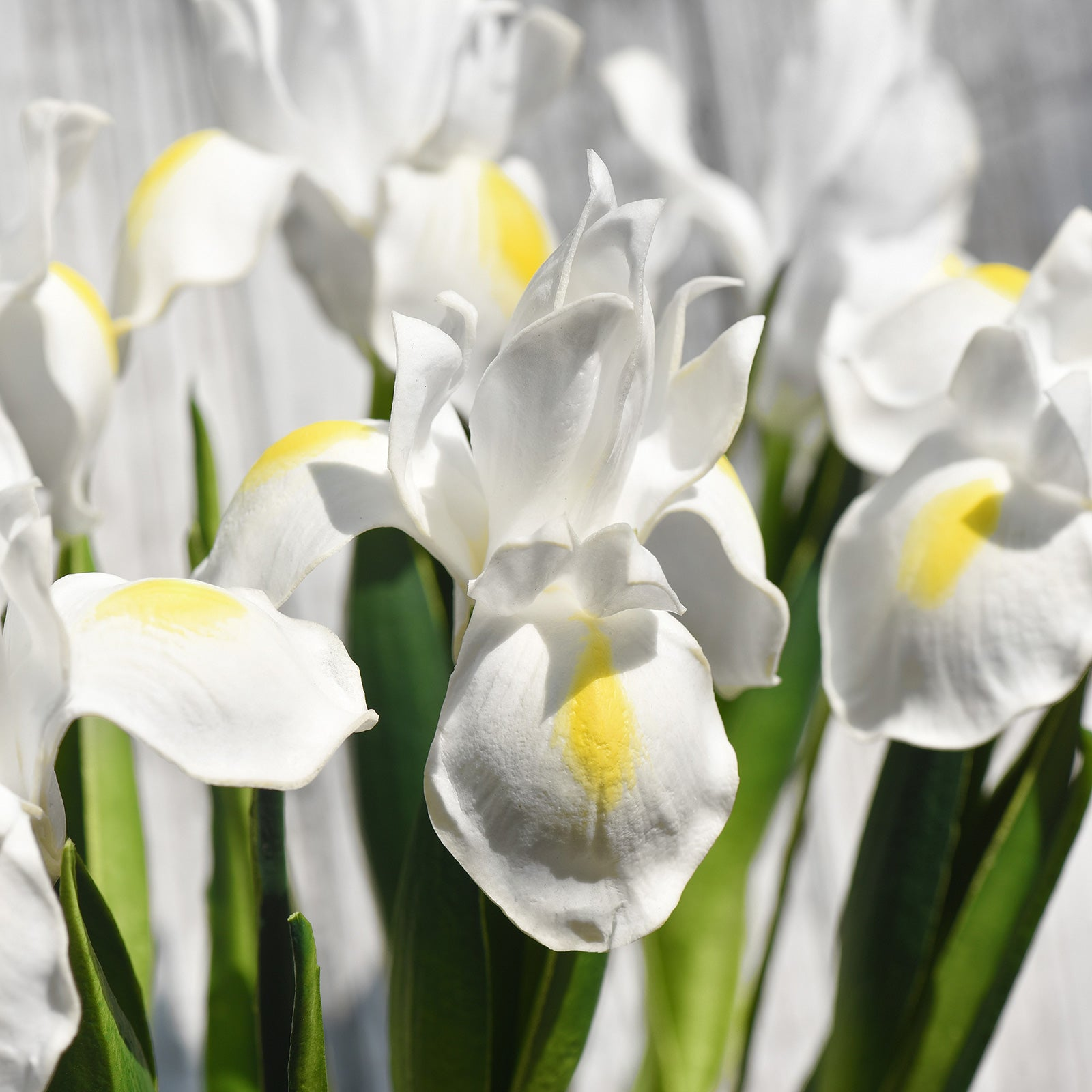 6 Long Stems Iris (White) Real Touch Artificial Flower Bouquet