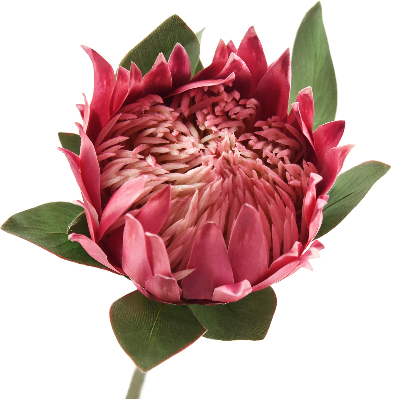 Fiveseasonstuff King Protea Real Touch Silk Artificial Flowers For Wed