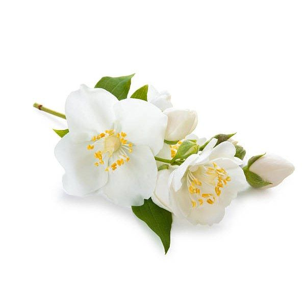 Therapeutic Grade Jasmine Essential Oil