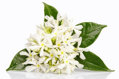 Therapeutic Grade Neroli Essential Oil
