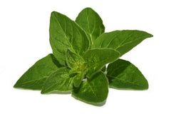 Therapeutic Grade Oregano Essential Oil