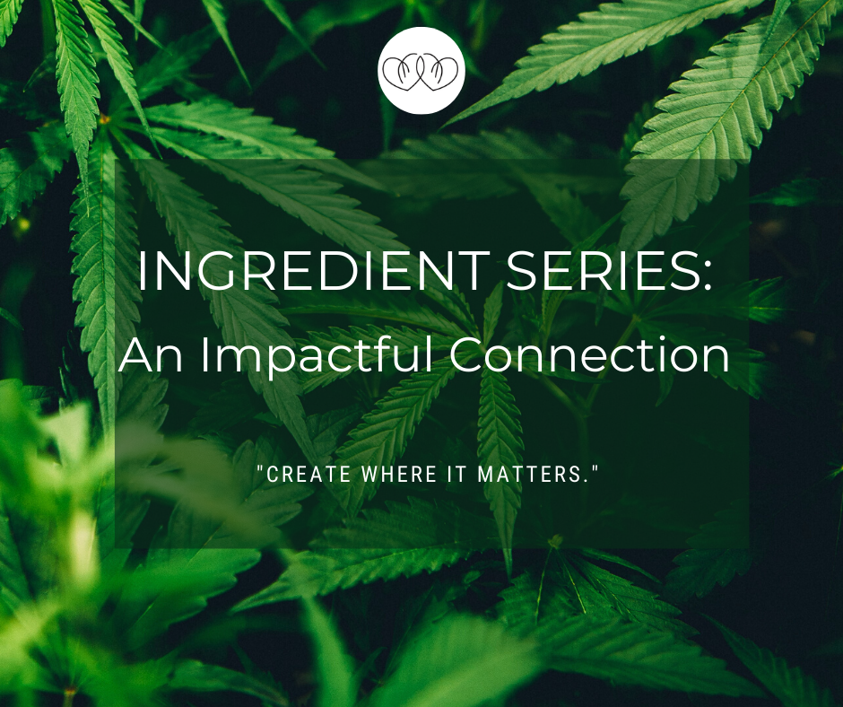 Ingredient Series: An Impactful Connection