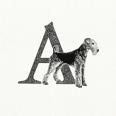 A for Airdale Terrier