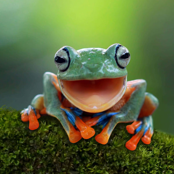 Why Frogs Are Fantastic