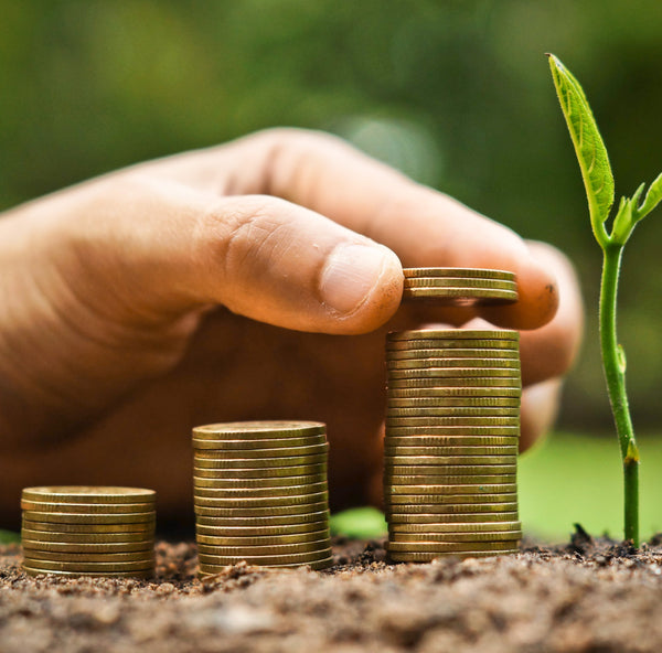 5 Easy Ways to Go Green With Your Finances