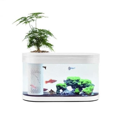 New Aquaponics Ecosystem Aquarium Fish Tank  from Almas Collections