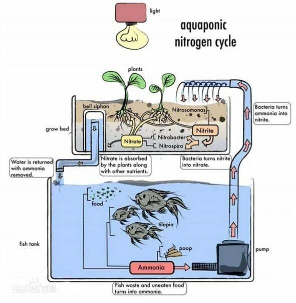 Mini Aquaponics Systems