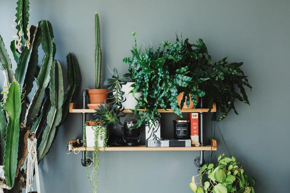house plant in the plant stand or plant shelf