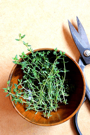 10 herbs that can be grown indoors