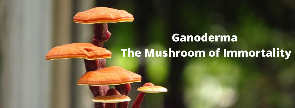 The Mushroom of Immortality in India, China, Japan and Korea?
