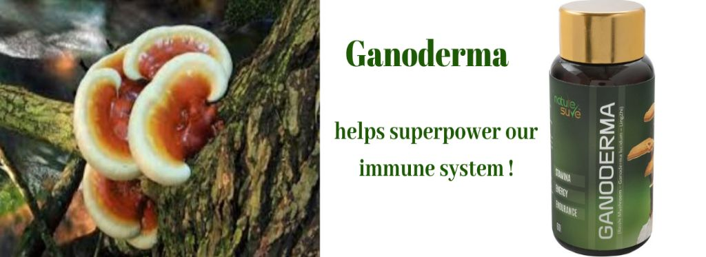 Ganoderma helps superpower your immune system