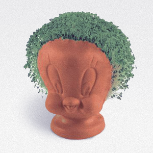 Curio & Co. remembers Chia Pets!
