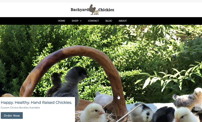 New Backyard Chickies website