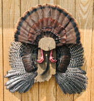 Indiana Turkey Fan Plaque - Ringtails and Tall Tales Hunting, Dog Supply, and Taxidermy