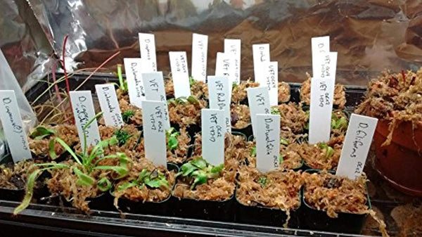 4 Inch Plastic Plant Garden Labels @ The Growing Shop