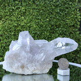 1.051kg 12x10x13cm Turtle Clear Clear Quartz from Brazil - Locco Decor